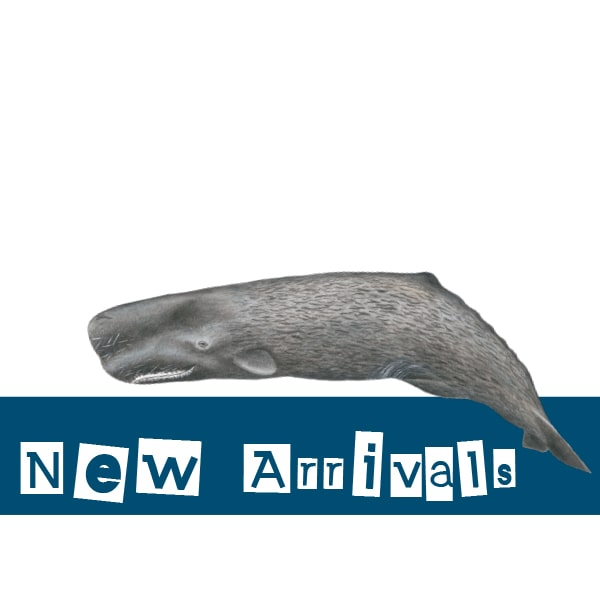 Madeira Whale Museum New Arrivals Products