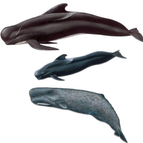 """Coleção de postais """"Baleias e golfinhos da Madeira"""" (cor)"""