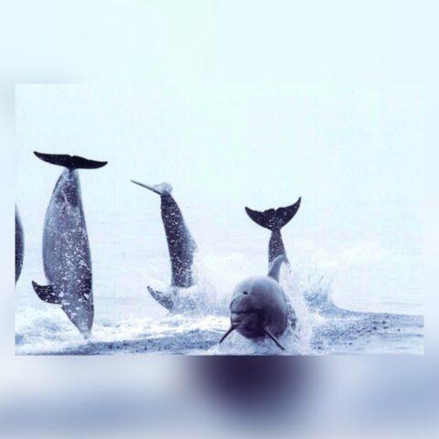 Cetacean collection postcards
